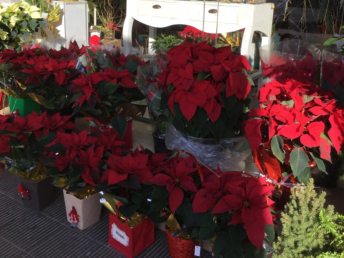 flores-de-navidad-1200x900